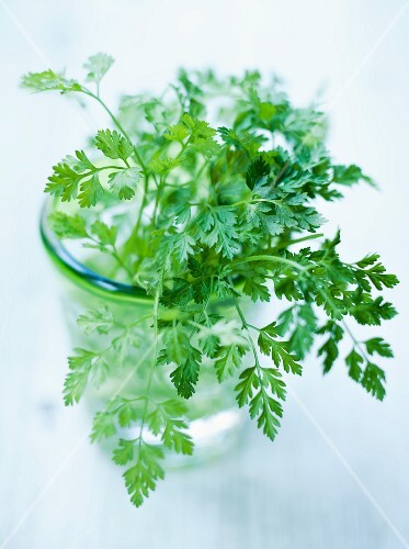 Fresh chervil in a glass