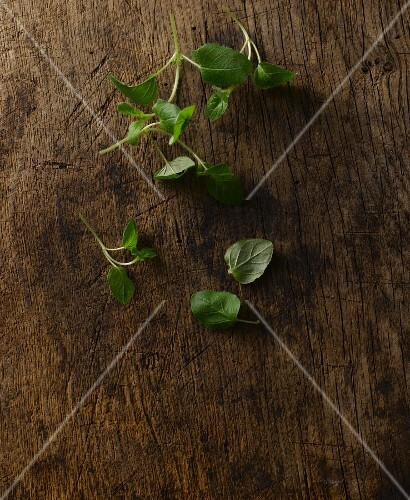 Fresh oregano on a wooden board