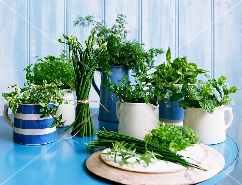 Various fresh herbs in jugs