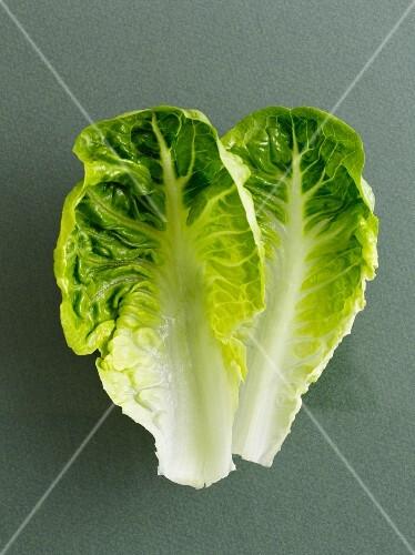 Two lettuce leaves