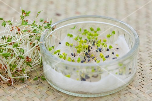 Various sprouts, some in a germination glass