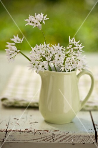 Wild garlic flowers in a pitcher