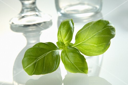 Fresh basil in front of glasses