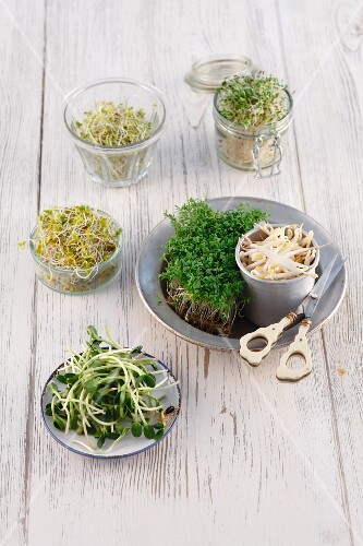 Various sprouting vegetables (broccoli, alfalfa, turnips, mungo beans, cress, sunflowers)