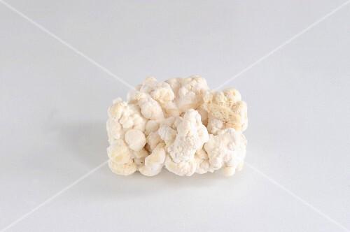Pom Pom Blanc (Igelstachelbart)