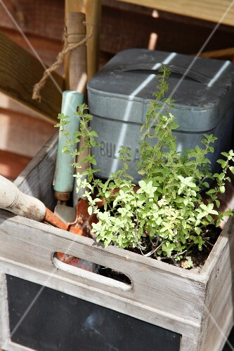A pot of herbs and garden tools in a wooden crate