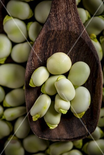 Broad beans on a wooden spoon