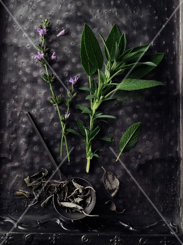 A sprig of sage with flowers on a black surface