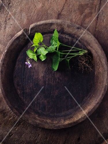 Scented violets in a wooden bowl