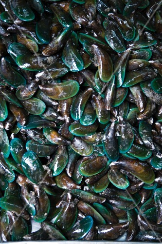 Green lipped mussels (full frame)