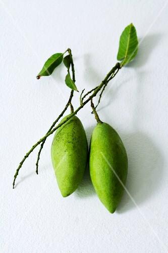 Two green Thai mangos
