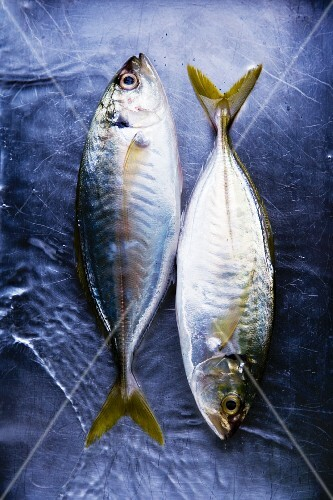 Two fresh Thai mackerel