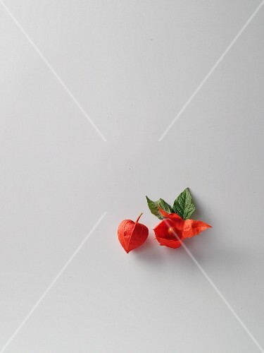 Physalis flowers with fruit