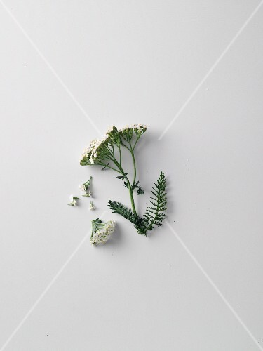 Yarrow, flowers and herbs