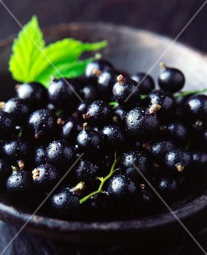 Fresh blackcurrants (close-up)
