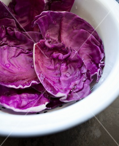 Freshly washed red cabbage leaves in a colander