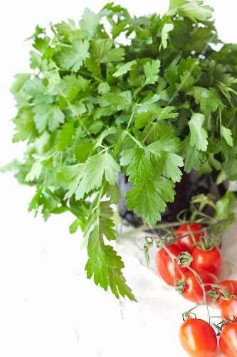 Flat leaf parsley in a pot with a vine of cocktail tomatoes in front