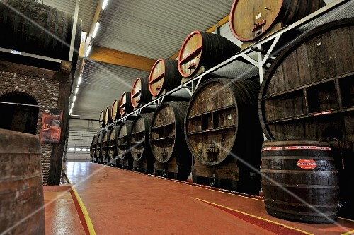 Belgian beer (Mort Subite, Lambic) in barrels in a brewery