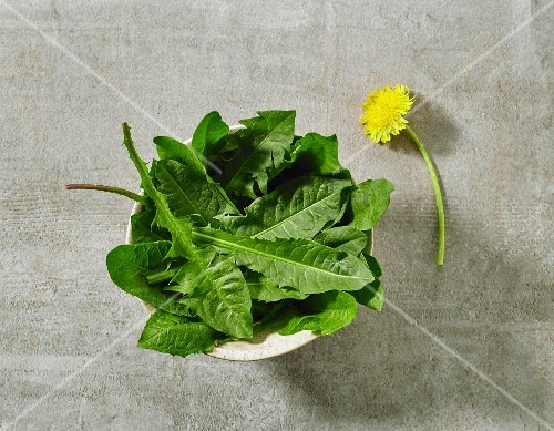 A bowl of fresh dandelion leaves on grey stone surface