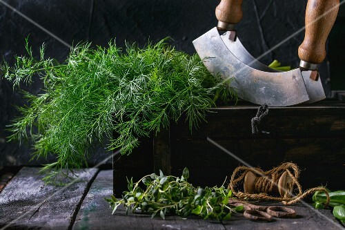 Fresh dill and thyme with an old pair of scissors, twine and a chopping knife on an old wooden table (seen from above)