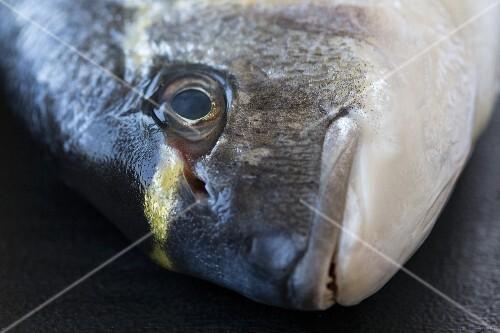 Seabream, close-up