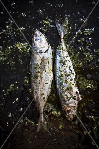 Raw sardines in a parsley and garlic marinade