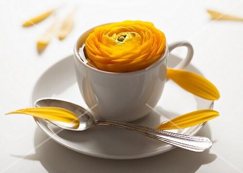 Yellow ranunculus in white mocha cup