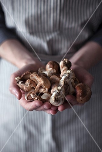 A woman holding freshly harvested wild mushrooms
