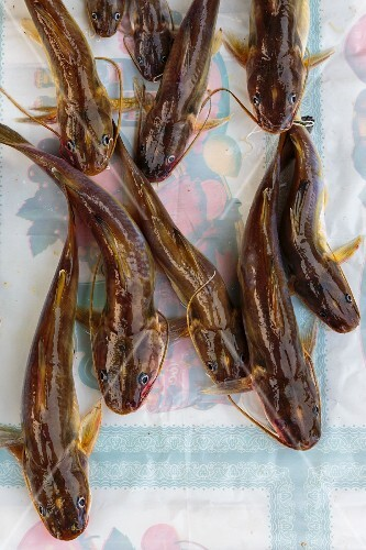Small catfish from the Mekong at a market in Luang Prabang, Laos