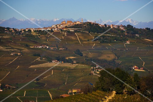 The winegrowing region of La Morra with vineyards in the middle of the Barolo DOCG cultivation area