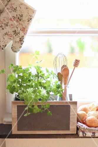 Fresh coriander and kitchen utensils on windowsill