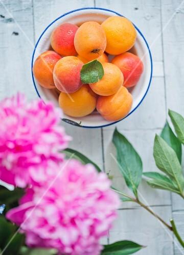 Fresh apricots in an enamel bowl