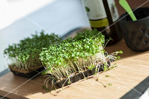 Punnets of fresh cress