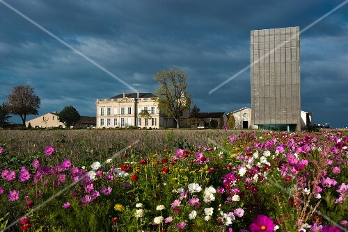A field of wild flowers with Gruaud Larose palace and tower in the background