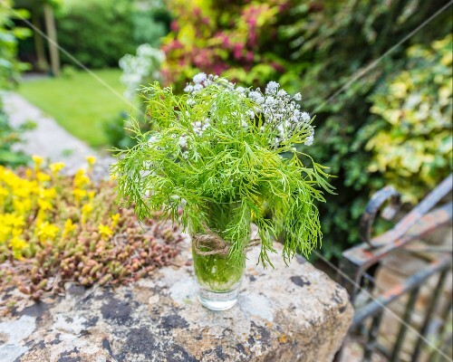 Dill in a glass of water on a stone wall in a garden