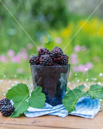 Blackberries, blackberry leaves and gypsophila on a garden table