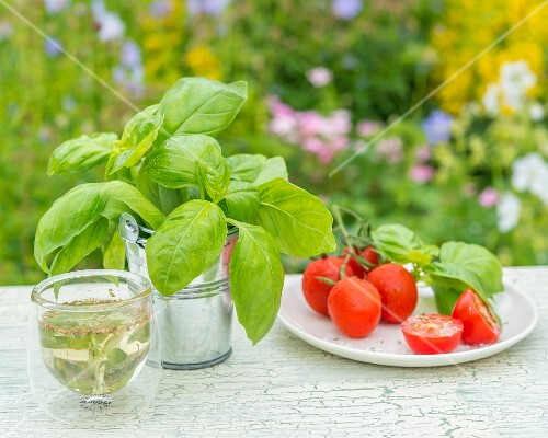 Basil, tomatoes and herb oil on a garden table