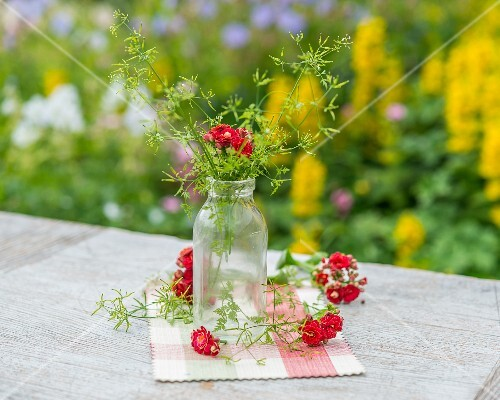 Chervil in a glass bottle on a garden table