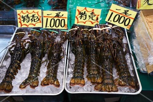 Lobster at the Tsukiji fish market in Tokyo, Japan