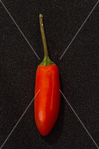 A red 'Baby Morich' chilli