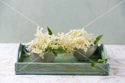 Elderflowers in cups on a wooden tray