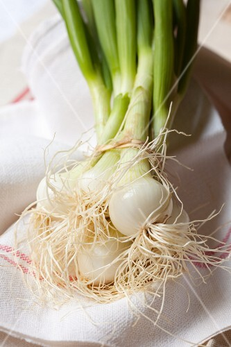 Bundle of spring onions