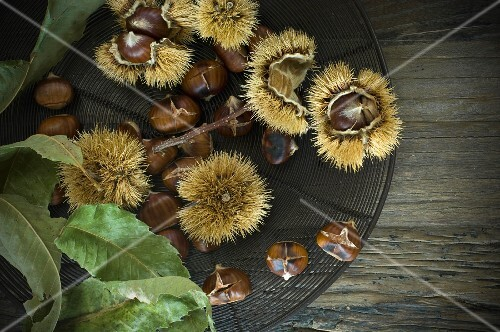 Chestnuts, raw and roasted