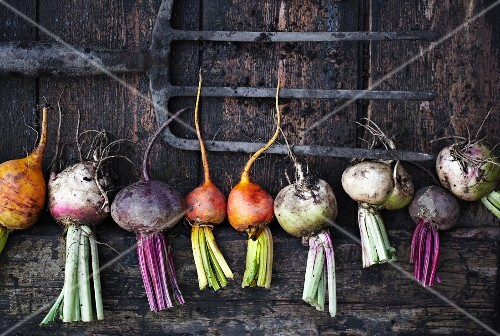 A row of various types of turnips