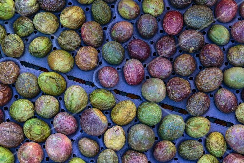 A tray of passion fruits at a market in San Diego, USA