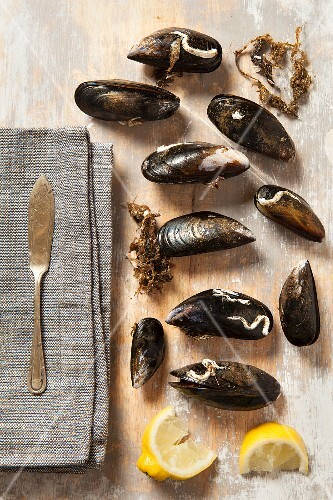 Live mussels on a wash board with lemon wedges
