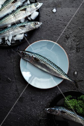 An arrangement with fresh sardines, one on a plate and others on a slate surface (seen from above)