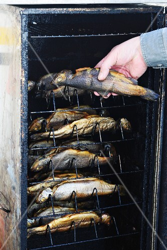 Trout being smoked