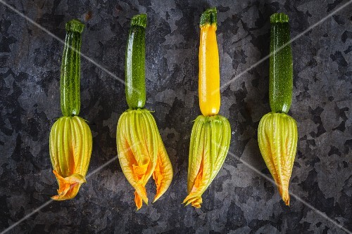 A row of courgette flowers (seen from above)