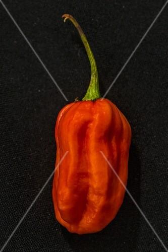 A Carolina Reaper chilli pepper